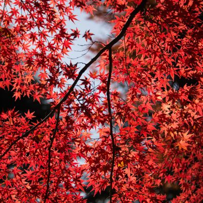 blurred-background-branches-colors-715134