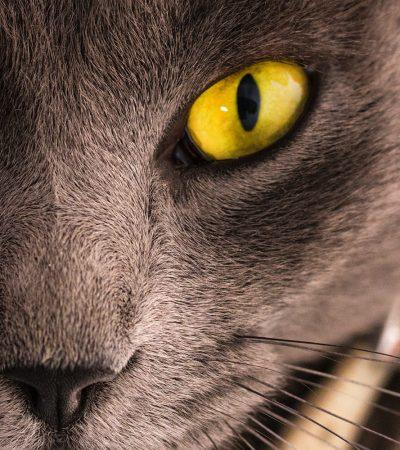 Cat-Power2